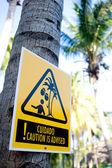Danger: falling coconuts — Stock Photo