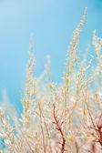 Sagebrush — Stock Photo