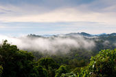 Panama Jungle Vista — Stock Photo