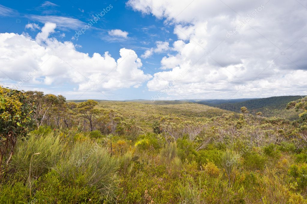 This image shows a Royal National Park Vista - NSW, Australia — Stock Photo #10271385
