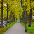 The alley with trees and lanterns (lamps) in the park near Men M — Stock Photo
