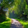 Misterious shady green alley with trees in the park in Fulda, He — Stock Photo