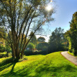Stock Photo: Misterious shady green alley with trees in park in Fulda, He