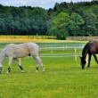 2 horses eating grass near Schloss Fasanarie in Fulda, Hessen, G — Stock Photo