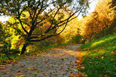 Nice pathway in the city at autumn in Fulda, Hessen, Germany — Foto de Stock
