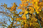 Lamp stand, yellow maple forest with blue sky in Fulda, Hessen, — Stock Photo
