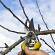 Tree Pruning — Stock Photo