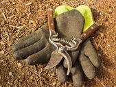 Gardening Clippers and Gloves — Stock Photo