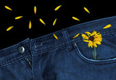 Blue Jeans And Calendula — Stock Photo