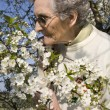 Grandmother and cherry tree flowers — Stock Photo