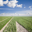 Field and sky in spring — Stock Photo