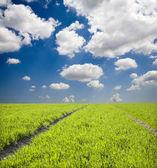 Pola i niebo na wiosnę — Zdjęcie stockowe