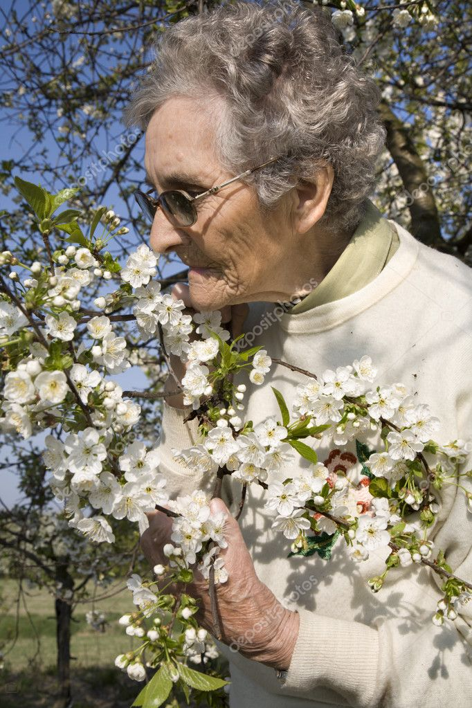 grandmother and cherry tree flowers  — Stock Photo #10152527