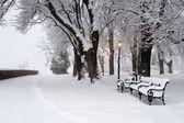 Park im winter - morgen — Stockfoto