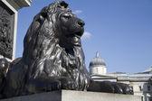 Trafalgar square londres - monument nelson du lion fom — Photo
