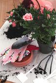 Garden equipment with flower — Stock Photo