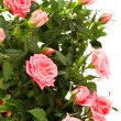 Bunch of pink roses — Lizenzfreies Foto