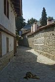 Bansko, famosa estância de esqui na bulgária, cão vadio na arquitetura tradicional rua, velho — Foto Stock