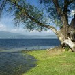 Стоковое фото: Batak lake, Rhodopi mountain