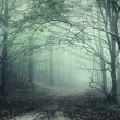 Royalty-Free Stock Photo: Green fog in a mysterious forest