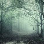 brouillard vert dans une forêt mystérieuse — Photo #10104625