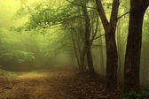 Green forest with fog — Stock Photo