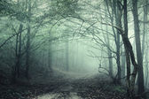 Green fog in a mysterious forest — Stock Photo