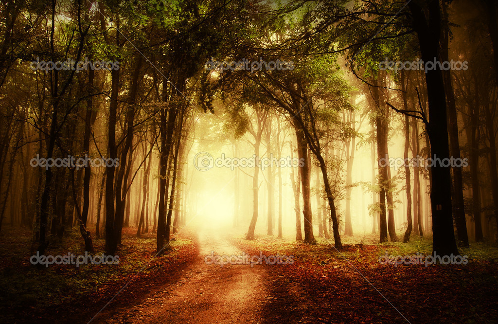 Road through a beautiful golden forest at autumn  — Stock Photo #10104601