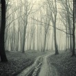 Stock Photo: Path through a forest with black trees and mist