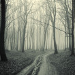 Path through a forest with black trees and mist - Stock Photo