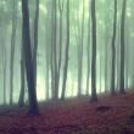 brouillard vert en forêt au lever du soleil avec brouillard — Photo