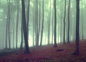 Green fog in forest at sunrise with fog — Stock Photo