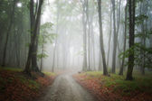 Road through a beautiful forest with fog — Stock Photo