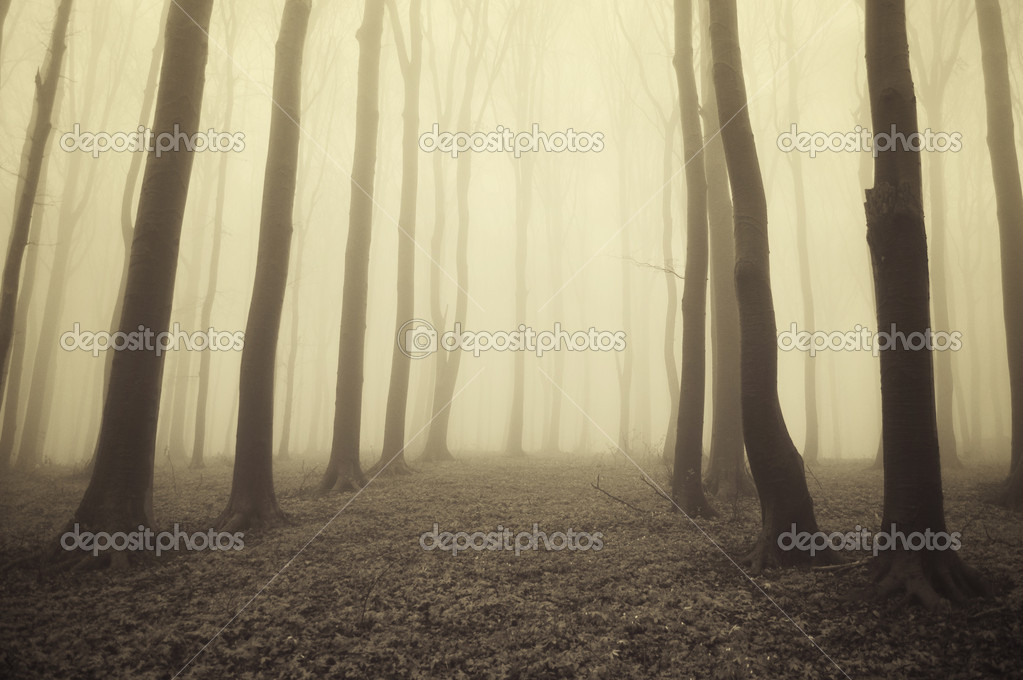 Golden light in a beautiful forest with fog in autumn — Stock Photo #10156298