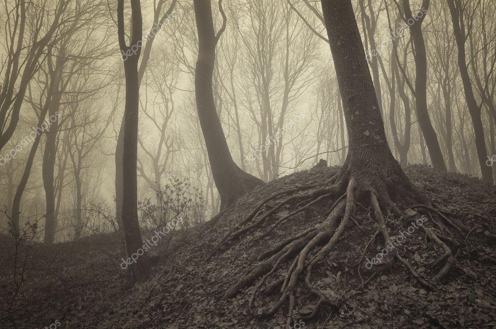 Фотообои Деревья с видимыми корнями в туманном лесу