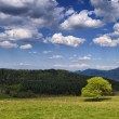 Spring landscape with tree green grass and clouds on a blue sky — Stock Photo