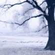 Tree on a frozen meadow — Stock Photo