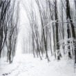 Stock Photo: Forest with snow and fog