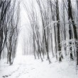 Forest with snow and fog — Stock Photo