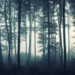 Trees in a foggy forest — Stock Photo