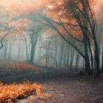 arbres rouge feuilles dans une forêt de brouillard — Photo #10217428