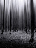 Infinite dark mysterious forest — Stock Photo