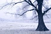 Boom op een bevroren weide — Stockfoto