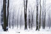 Sneeuw in het bos met mist — Stockfoto