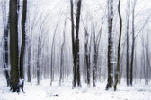 Sníh v lese s mlhou — Stock fotografie
