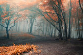 Trees with red leafs in a forest with fog — Stock Photo