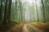 Road in the woods with fog — Stock Photo