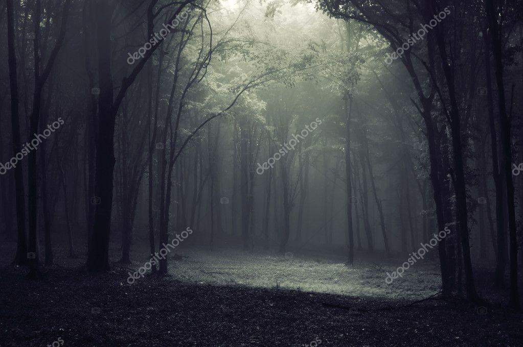 Фотообои Света в темном лесу создаем каркас