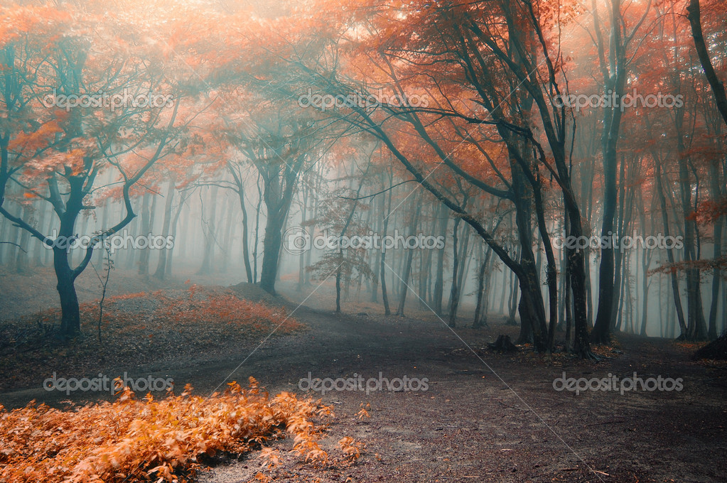 Path between trees with red leafs in a forest with fog  — Stock Photo #10217428