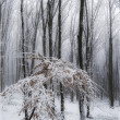 Snow in a forest with frost on branches — 图库照片